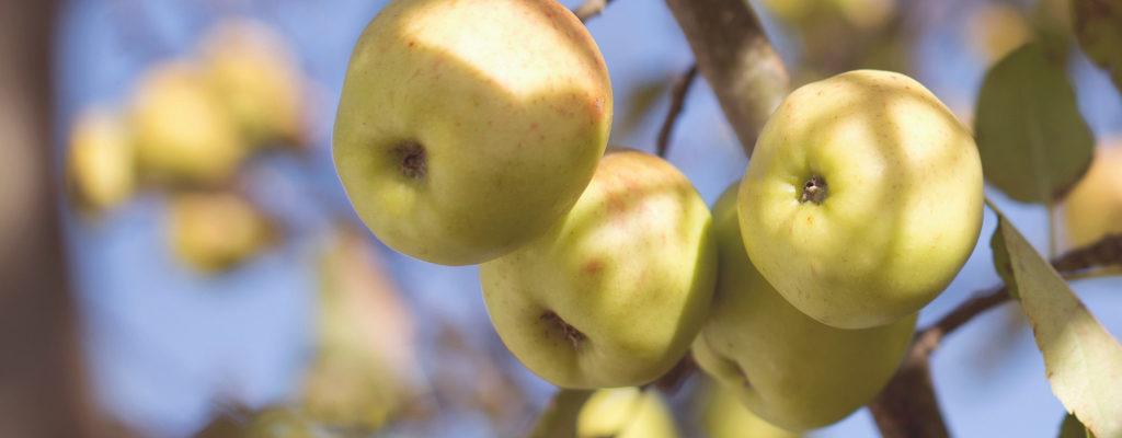 fruitful years